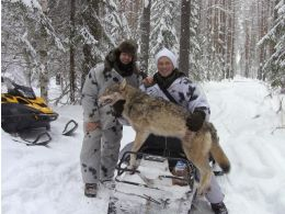 New video on YouTube - wolf hunting